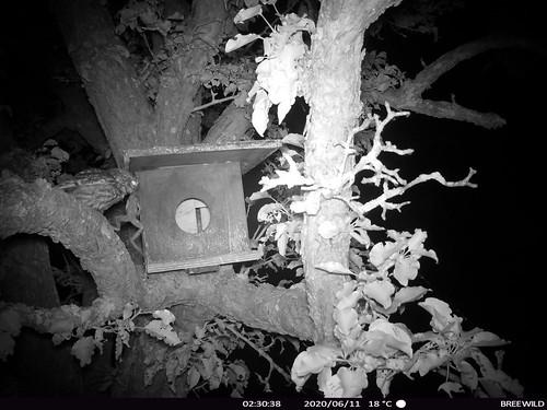 Blekenbrink met kikker
