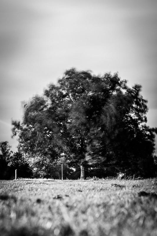 Wind in Cambridge v2