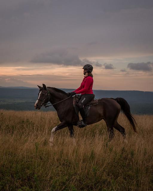 20200814 Sods Sunset Horses_58-2