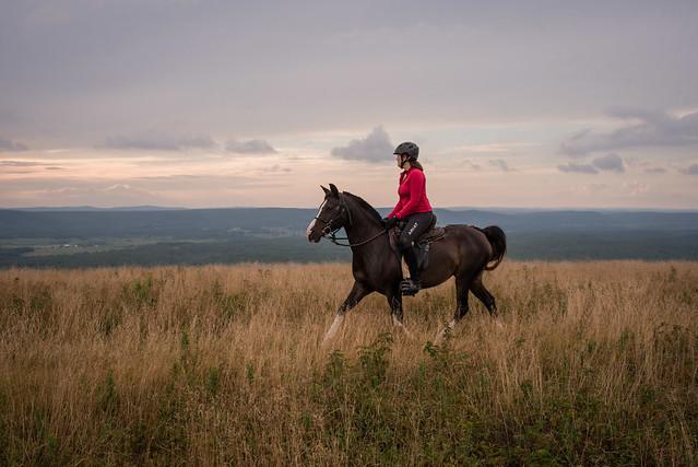 20200814 Sods Sunset Horses_75