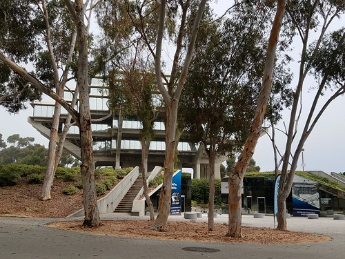 Geisel Library Through the Trees - UCSD