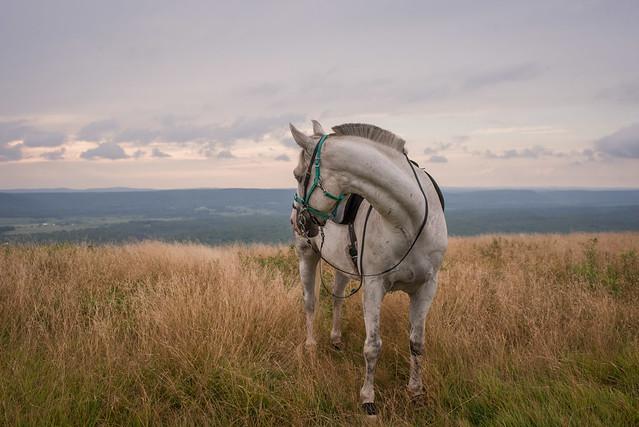 20200814 Sods Sunset Horses_166