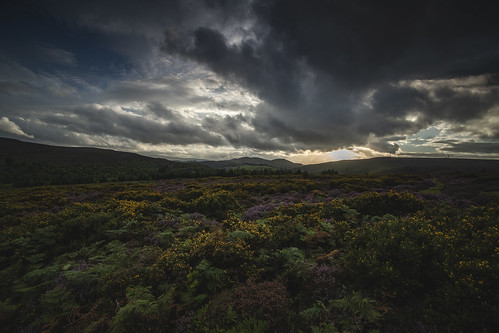 heather gorse ferns worlds end minera wrexham llangollen wales cymru denbighshire summer frightened tree photography frightenedtreephotography rebecca adrian wright clouds mood sunset tamron 1735mm