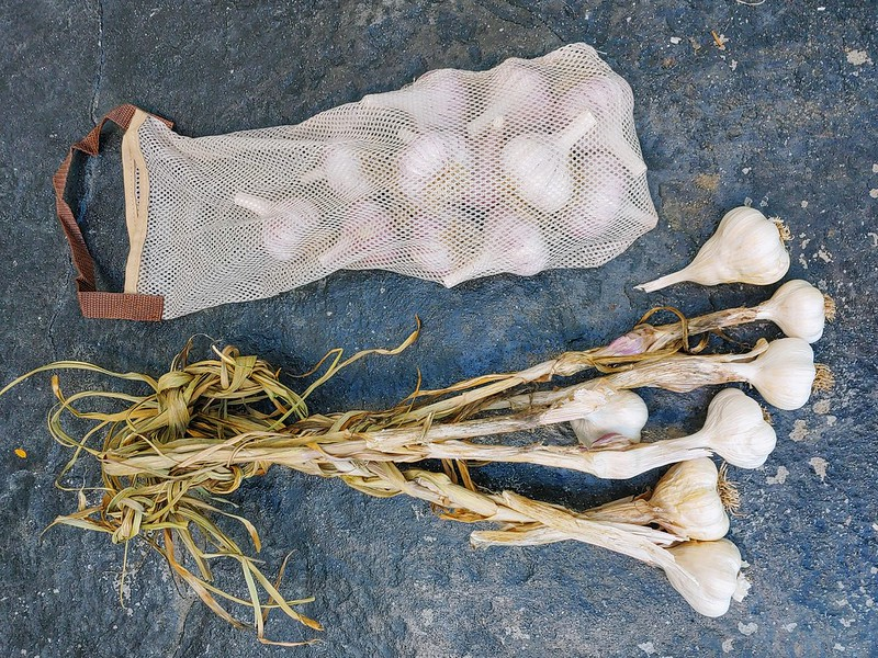 Cleanin up the Garlic for Storage
