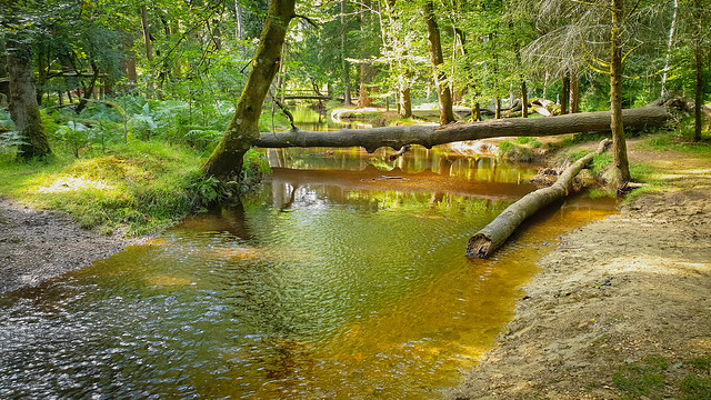 Blackwater Tall Trees Trail (New Forest)