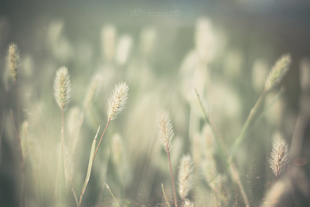 .Soft kisses on a summer's day.