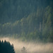 Fog rolling through the lush summer pines of Weissensee