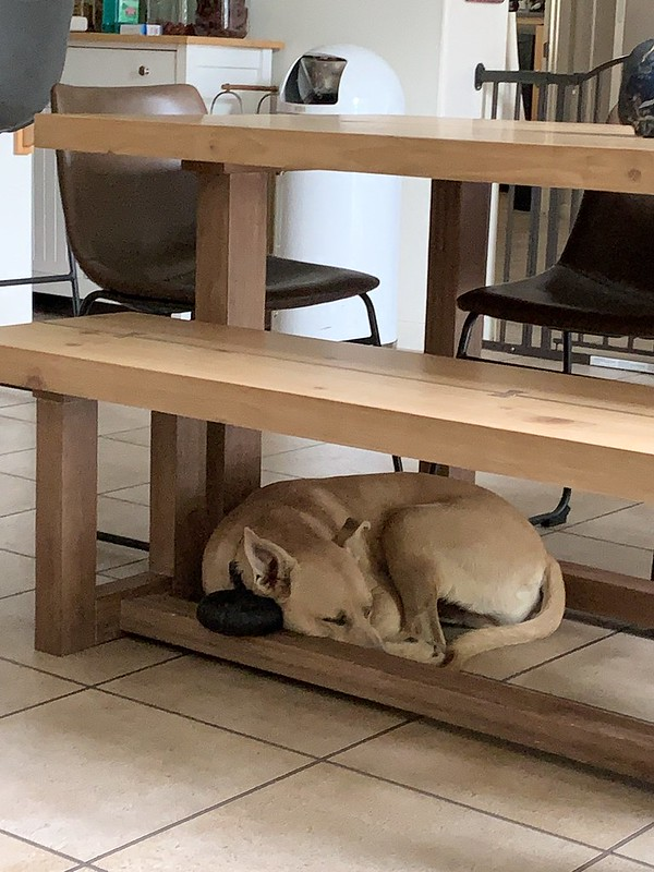 NO NEED FOR A DOG BED