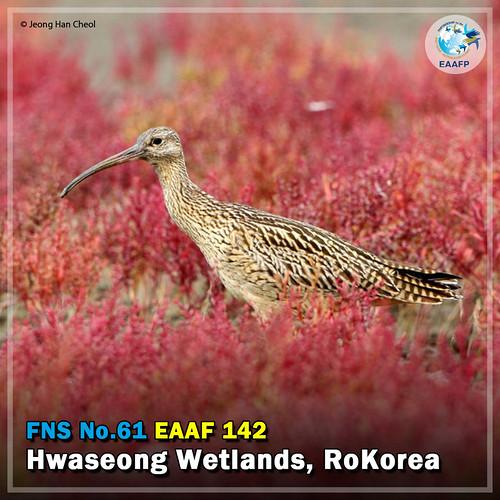 EAAF142 (Hwaseong Wetlands) Card News