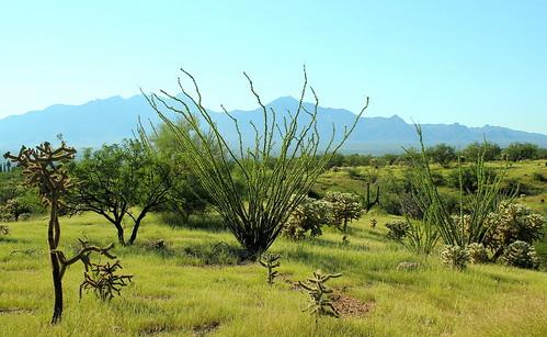 Local grassland habitat, monsoon season.