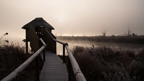 rietvlei sunrise misty landscape nature winter southafrica africa fog outside water lake