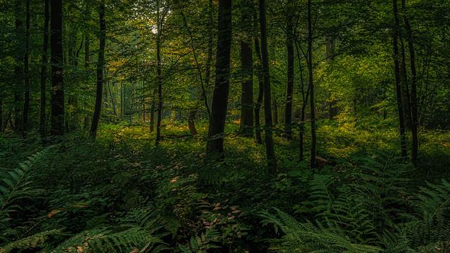 August - woodland