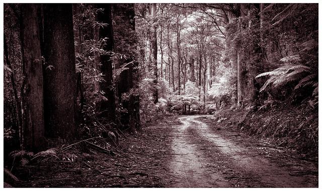 Dirt Road  # 11