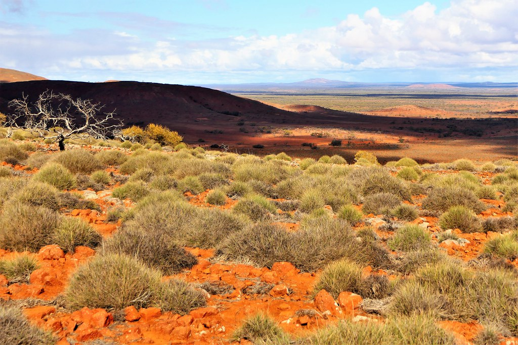 Shadows, Silhouettes and Spinifex