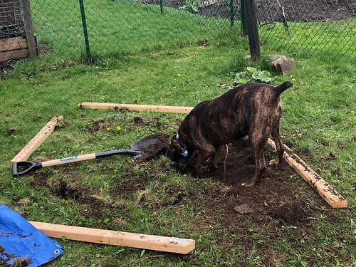 Carleton Place - Hector Helping to dig