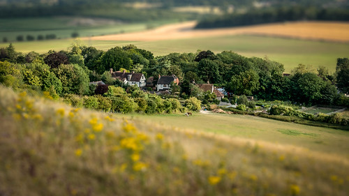thurnham summer tree maidstone tiltshift sonyrx100m3 miniature kent horse northdowns england cs6 tiny