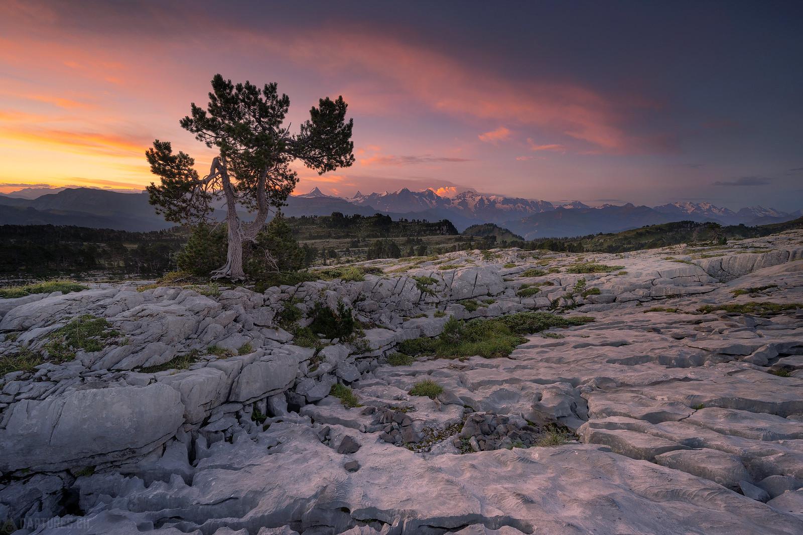 Colorful sunrise and a tree - Seefeld