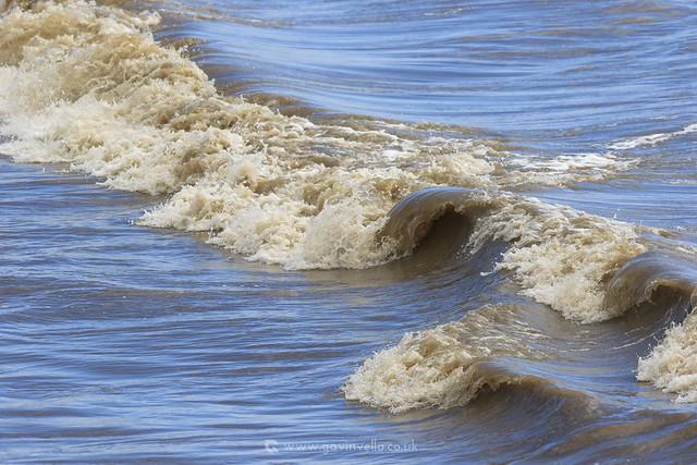 Estuary Waves W- SR1A2893