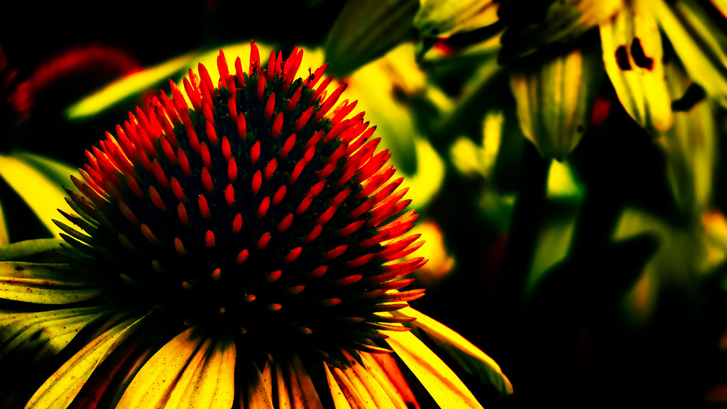 Abstract Yellow Coneflower