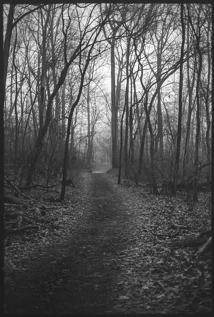 Path into the Gloom