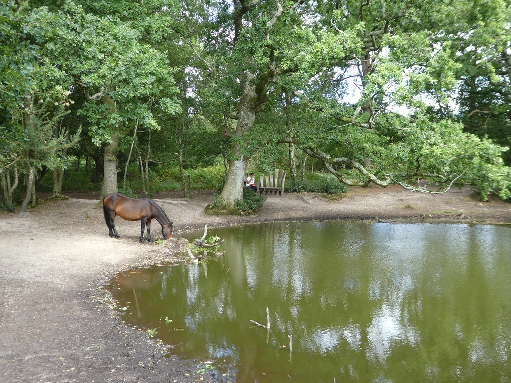 Rushy Pond, Thorncombe Wood, Dorset