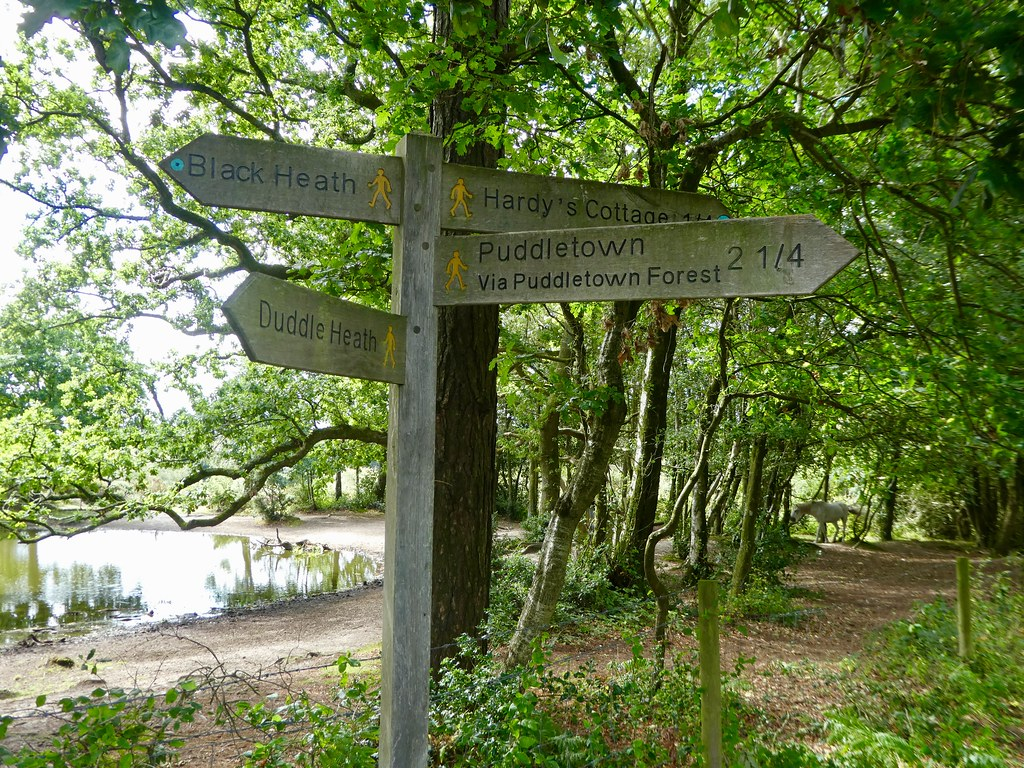 Signposts in Thorncombe Wood, Dorset