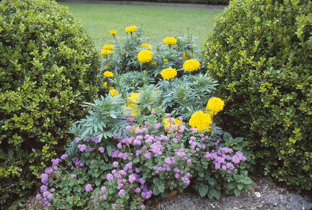 Heyward- Washington House - Formal Garden Flowers