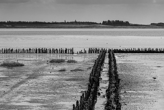 Black and White Wadden Sea