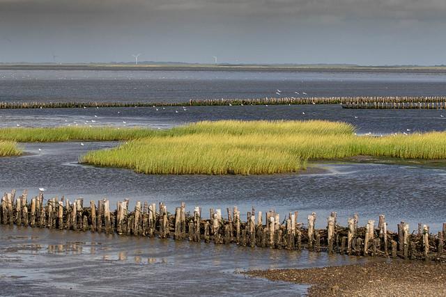 The Wadden Sea, Denmark