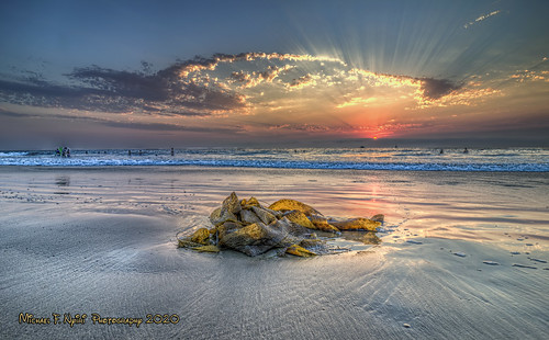 sunset seaweed torrancebeach torrance california southerncalifornia beach ocean pacificocean colors