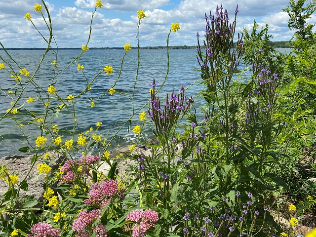 WILD Flowers at the Shoreline