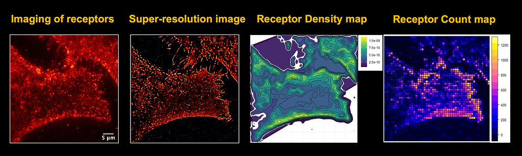 Microscopy Images and Maps of Receptors in a Cancer Cell