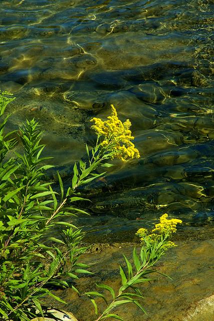 Weeds & Water