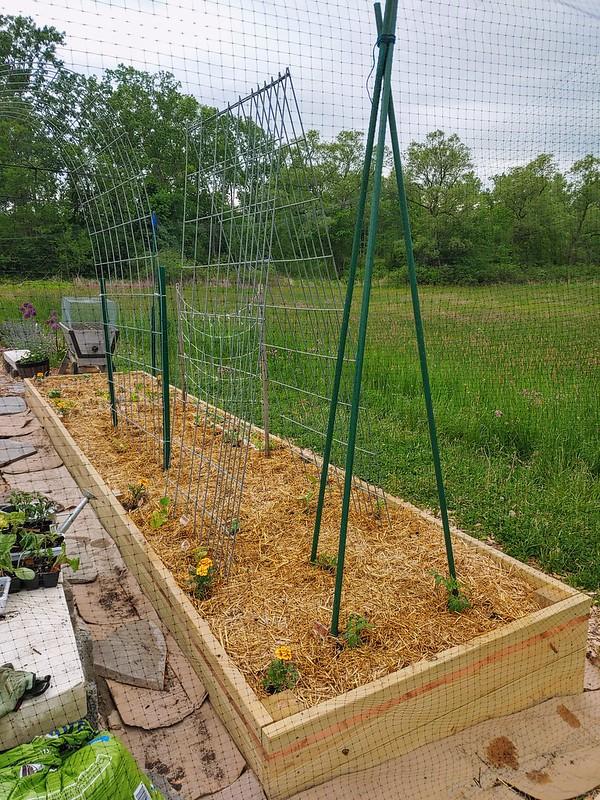 The Tomato-Teepee Side of the Veggie Garden
