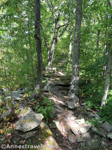A rocky portion of the Golden Eagle Trail below the Raven's Horn, Tiadaghton State Forest, Pennsylvania