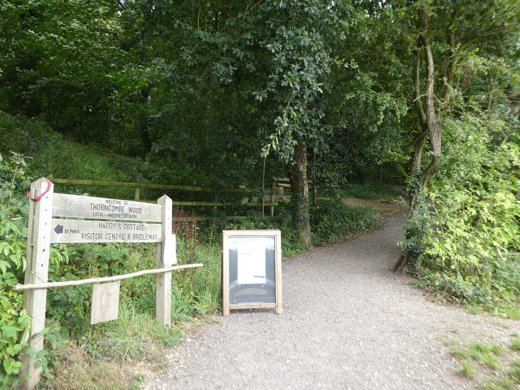Thorncombe Wood Trail, Higher Bockhampton