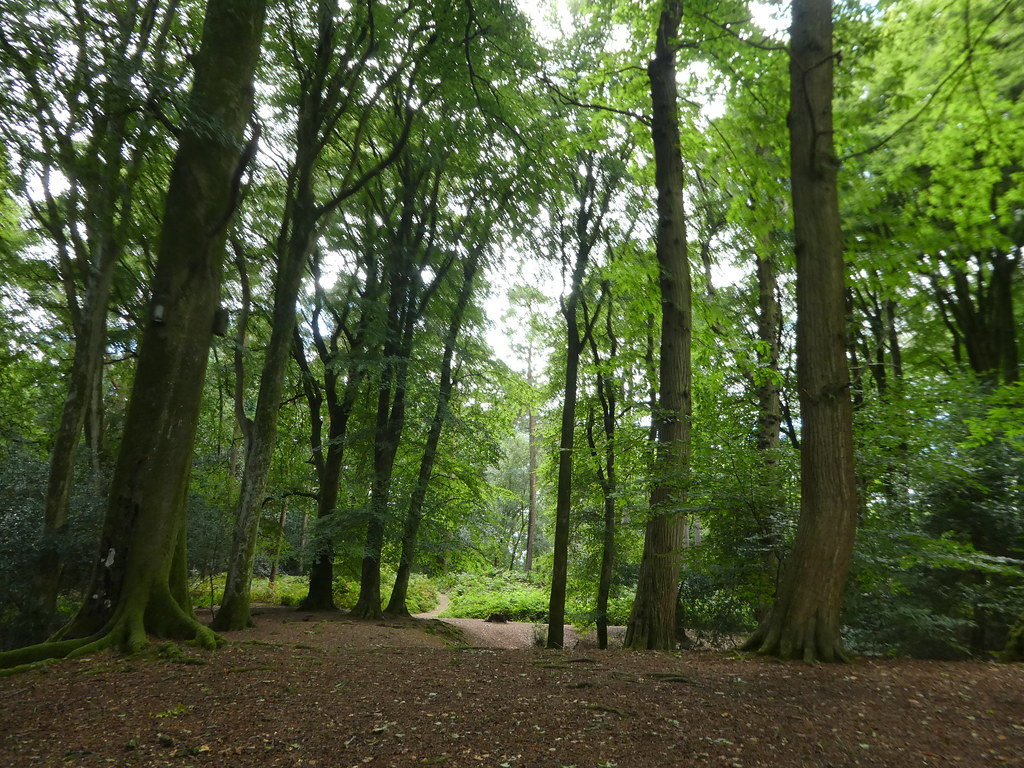 Thorncombe Wood, Dorset