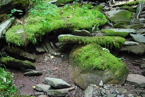 Mossy rocks in Wolf Run along the Golden Eagle Trail, Tiadaghton State Park, Pennsylvania