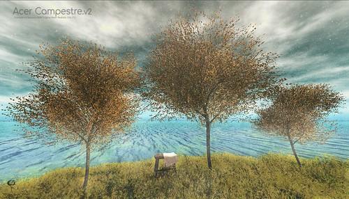 The Little Branch - Acer Campestre Tree v2  @ Sense Event