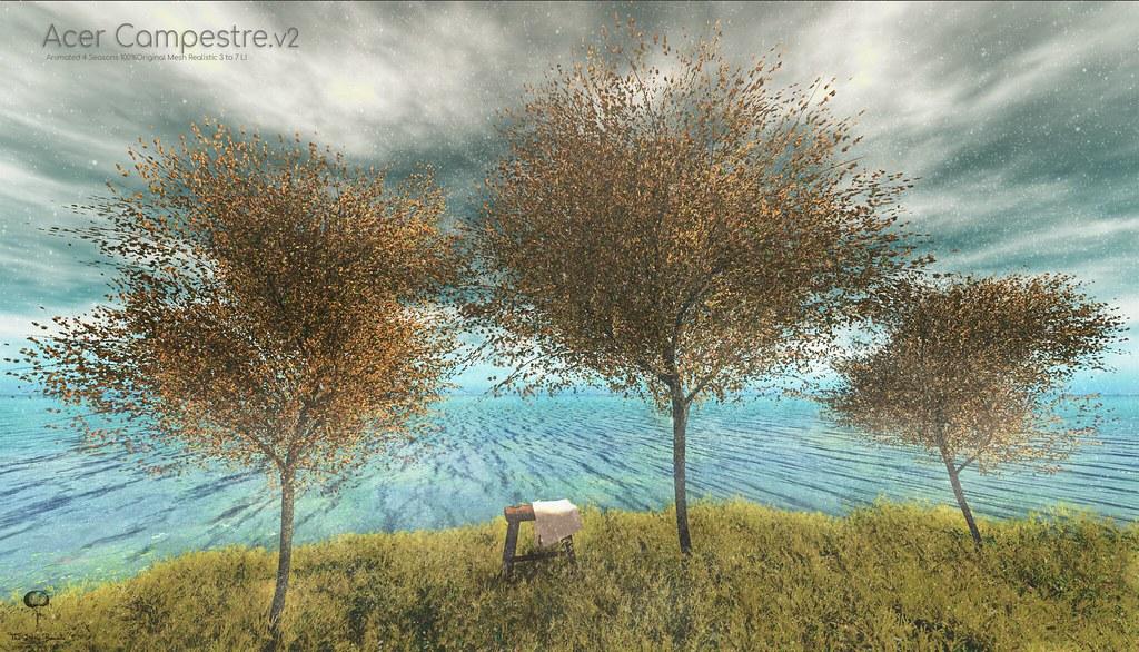 The Little Branch – Acer Campestre Tree v2  @ Sense Event