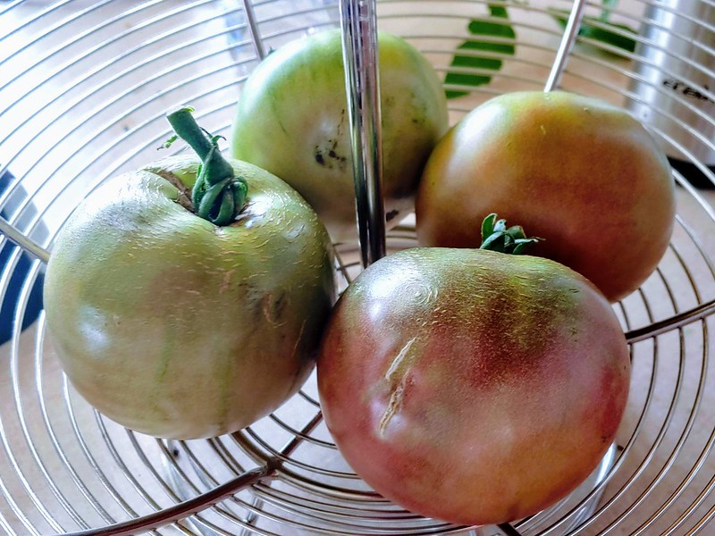 Cherokee Purple Tomatoes Picked at the 'Pink Stage' to avoid cracking