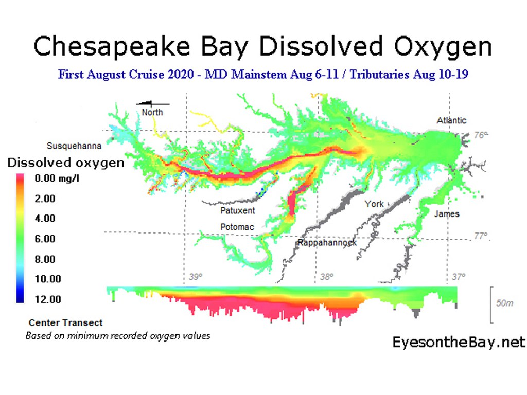 Map showing Chesapeake Bay Dissolved Oxygen, Early August 2020