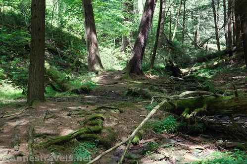 The Golden Eagle Trail in the upper part of Wolf Run, Tiadaghton State Forest, Pennsylvania