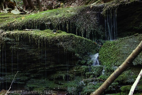 One of the drippy little waterfalls in Wolf Run along the Golden Eagle Trail, Tiadaghton State Forest, Pennsylvania