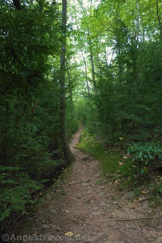 The Golden Eagle Trail on the old road above Bonnel Run, Tiadaghton State Forest, Pennsylvania
