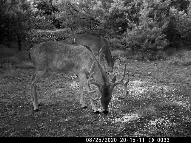 trail cam 8 28 20-4