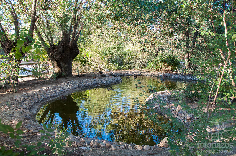 Senda del Arroyo de la Fresneda