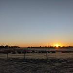 good morning pasture