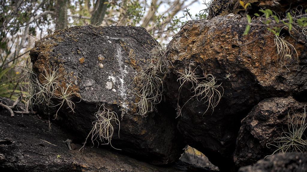 Rochas e Bromélias
