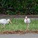 Neighbors_NZ6_2337